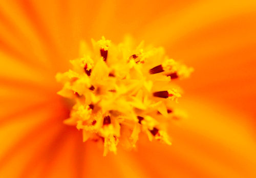 花の写真を6枚