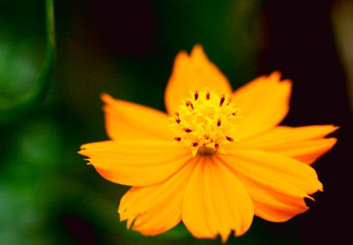 ブログ更新「天から花が降り注ぐ」