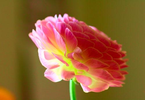2月27日(土)〜お寺で楽しい瞑想会〜 Vol.3